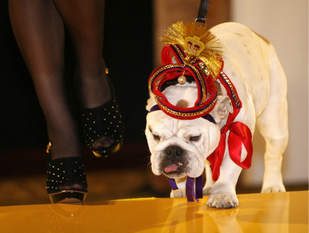 Cavalli's doggie couture